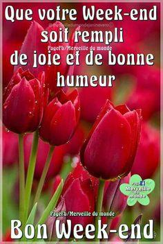 Bon Weekend, Stuffed Peppers, Vegetables, Facebook, Food, Week End, Flowers, Gardens, Happy Saturday Morning