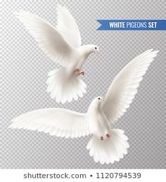 Buy White Dove Set by macrovector on GraphicRiver. White dove transparent set with peace symbols realistic isolated vector illustration Blur Image Background, Iphone Background Images, Love Backgrounds, Black Background Images, Dove Images, Dove Pictures, Images Photos, Silhouette Logo, Logo Abstrait
