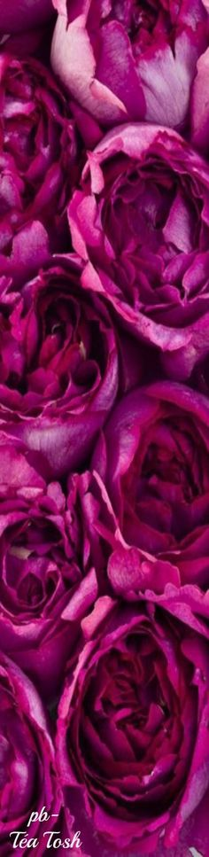 29eb45847dc4 93 best Pink  Fuchsia + Magenta Red Violet Mixes images on Pinterest ...