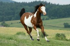 own a horse. a paint.