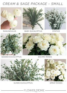 Cream and Sage- Small PackageDefault Title - Pateles de boda - Year Round Flowers, Sage Green Wedding, Green And White Wedding Flowers, Types Of White Flowers, Yellow Wedding, Silver Flowers, Perfect Wedding, Dream Wedding, Summer Wedding