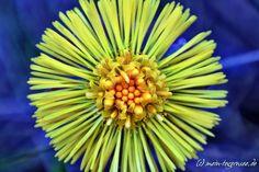 Kreuth am Tegernsee - eine gelbe Blume