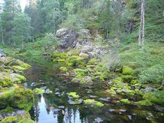 A hiking route through a deep ravine in the Pyhä-Luosto National Park, Lapland, Finland Hiking Routes, Lapland Finland, Places To Go, National Parks, River, Mountains, Photography, Outdoor, Beautiful