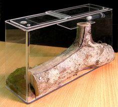 ameisen formicarium - Google Search