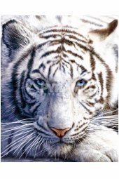 Tiger jigsaw puzzles are fun to do because tigers are such gorgeous animals. Tiger jigsaw puzzles are a fun way for the family to enjoy time together. Pet Tiger, Tiger Face, Tiger Cubs, Maltese Tiger, Bear Cubs, Tiger Head, Tiger Pictures, Animal Pictures, Beautiful Cats