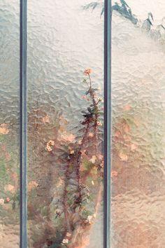 """Botanical"" series by Samuel Zeller   http://inagblog.com/2015/12/samuel-zeller/   #photography"