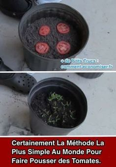 Ineffable Secrets to Growing Tomatoes in Containers Ideas. Remarkable Secrets to Growing Tomatoes in Containers Ideas.