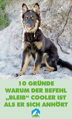 10 Gründe, warum der Befehl bleib cooler ist als er sich anhört! Jetzt im Haustier Notfallkarte Hunde Blog! #hunde #wissen