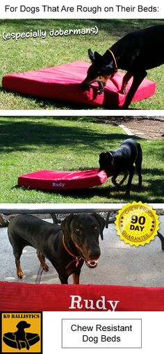 """Orthopedic Dog Bed from K9 Ballistics, defeats Rudy the Doberman Pinscher. Rudy used to destroy all his beds, but he can sleep on a comfy bed now that he's met his match. We like to call this the """"Doberman Proof Dog Bed""""."""