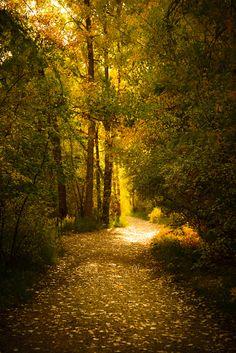 Clear Creek Canyon, Outdoor Photography, Fall colors, Colorado Landscapes, Golden Colorado. © Elimar Trujillo Photography 2013.