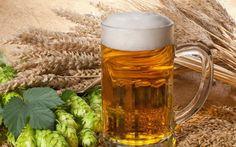 Gdy dbamy o nasze zdrowie i szczupłą sylwetkę wypicie orzeźwiającej szklanki złotego napoju może wywoływać w nas poczucie winy. Okazuje się, że niepotrzebnie! Picie piwa w rozsądnych ilościach ma właściwości zdrowotne, chroni przed chorobami serca, nerek, wzbogaca organizm w bardzo dobrze przyswajalne składniki i minerały, a do tego...nie dziwcie się, ale ma właściwości odchudzające !
