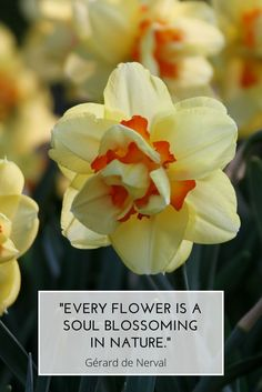 "#MondayMotivation #QuoteOfTheDay ""Every flower is a soul blossoming in nature."" - Gérard de Nerval"