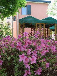 Flowers And gazebo! Bed And breakfast Al Giardino Venice Italy.