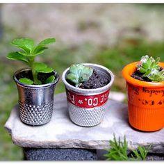 50 Magical And Best Plants DIY Fairy Garden Ideas 13