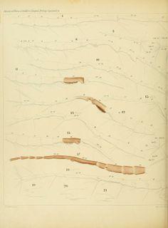 atlas - Systematik und faunistik der pelagischen copepoden des golfes von Neapel, - Biodiversity Heritage Library