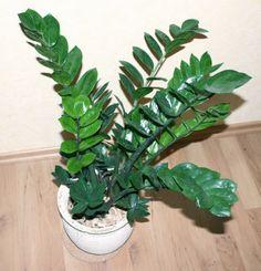 A maior frustração da iluminação limitada é conseguir manter as plantas bonitas. Confira nossa lista com 5 delas que se dão bem na sombra!