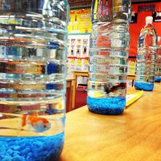 Mini Aquariums 1 Large Water Bottle 1 bottle of Aqua Safe from local Pet Store Several Bags of colored gravel (let students choose color) 1 dozen of feeder goldfish for around $2 bucks! Great for Ocean Units, fish themes, etc.