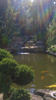 A beautiful koi pond with rainbow sunbeams. So happy I caught this shot!