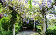 Die 10 schönsten Rankpflanzen für Pergola, Balkon und Terrasse!