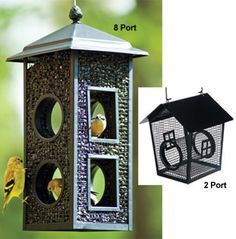 """Cling feeders are great for small birds, and keep """"bully birds"""" away from feeders. These are available at Doctors Foster and Smith."""