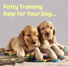 """Discover the latest """"hands off"""" potty training secrets as well as other helpful training tips for your dog. Click here to read more>> www.dog-names-and-more.com/hands-off-dog-training.html"""