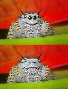 Cutest smiley spider ever!