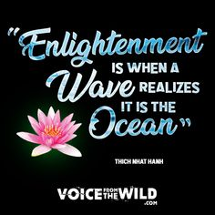 """Enlightenment is when a wave realizes it is the ocean"" ~ Thich Nhat Hanh #voicefromthewild #ThichNhatHanh #enlightenment"
