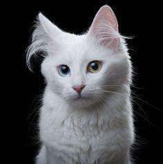 <p>The Animal Soul project o el Proyecto de Alma Animal fue creado por el fotógrafo Robert Bahou, en el cual muestra numerosos retratos para poder apreciar la belleza de los perros y gatos.</p>