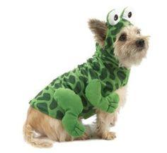 Top Paw Frog Halloween Dog Costume « Pet Advertisings