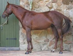 Goldie Goldie is a well conformed three year old colt by Bianconi, sire of over 500 career winners, with prizemoney...
