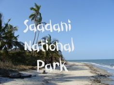 Located in the centre of the historic triangle of Bagamoyo, Pangani and Zanzibar, Saadani National Park covers 1100km square. It is the only wildlife sanctuary in Tanzania bordering the sea. The climate is coastal, hot and humid. It offers a unique combination of both marine and mainland flora and fauna in a culturally fascinating setting. About 30 species of larger mammals,reptiles and birds. Besides many species of fish, green turtle, Humpback whale and dolphins also occur in the ocean…