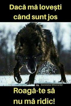 Wolf quotes and saying. The Wolf is a symbol of guardianship, instinct, loyalty, and spirit. The Wolf represents strong connection with instincts and intuition, high intelligence and communication – qualities we all should aspire to. Badass Quotes, Best Quotes, Marshmello Face, Lone Wolf Quotes, Angry Wolf, Wolf Pictures, Wolf Photos, Game Quotes, Warrior Quotes