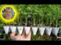 Hausfrau Farm Gardens Gardening Tips Vegetable Garden Sodas Plants Android Garden Recipes Farm Gardens, Earth Day, Vegetable Garden, Gardening Tips, Projects To Try, Plants, Android, Gardening, Garden