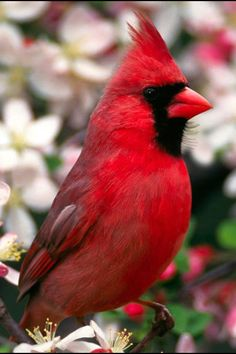I have prepared a wonderful photo gallery about birds. You can find the most beautiful birds in these photos. Nature birds, wild birds and more are waiting for you. Pretty Birds, Love Birds, Beautiful Birds, Animals Beautiful, Beautiful Bird Wallpaper, Beautiful Redhead, Exotic Birds, Colorful Birds, Animals And Pets