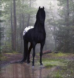 Gorgeous black blanketed appaloosa!! Very rare to be this perfectly colored.