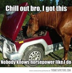 Google Image Result for http://static.themetapicture.com/media/funny-horse-fixing-car.jpg