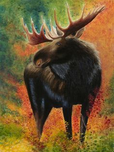 Moose Painting by Karla Horst - Moose Fine Art Prints and Posters for Sale