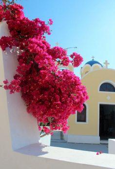 Greece Travel Inspiration - Gorgeous flowers outside a church Santorini, Greece Mykonos, Santorini Grecia, Santorini Island Greece, Beautiful World, Beautiful Places, Greece Travel, Greek Islands, Romantic Travel, Travel Inspiration