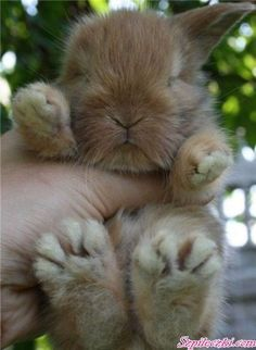 Adorable bunny with feet that are too big for him! shelbymaddie Adorable bunny with feet that are too big for him! Adorable bunny with feet that are too big for him! Cute Funny Animals, Cute Baby Animals, Animals And Pets, Wild Animals, Baby Bunnies, Cute Bunny, Easter Bunny, Tiny Bunny, Bunny Paws
