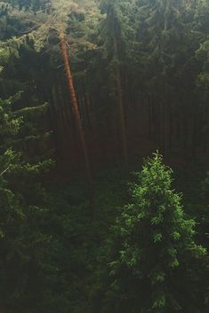 ..?.. #outdoorwood Beautiful World, Beautiful Places, Beautiful Forest, Mystical Forest, Belleza Natural, Land Scape, The Great Outdoors, Woodland, Nature Photography