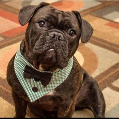 Tie on dog Tuxedo Bandana Green & White Gingham made to order