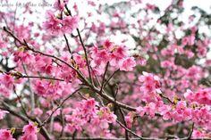 オートバックス沖縄プレゼンツ★写真コンテ スト=3=3 投稿いただいた画像をご紹介いたします! 撮影者は上原 佐都子さんです(^▽^)/ とっても美しく撮影されていますね! 投稿いただきありがとうございました! 引き続き写真投稿をおまちしてます! 皆さんが撮影した画像を投稿してください! 1月のテーマは「緋寒桜」です☆☆ 優秀作品は、オートバックス沖縄のフェイス ブックページにてご紹介させて頂きます♪ 皆様の自慢の写真を、楽しみにお待ちしてお りま〜す(^▽^)/