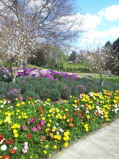 Annuals at hunter valley gardens