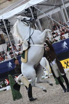 The Spanish Riding School Stallions are trained using Classic Horsemanship techniques dating back centuries