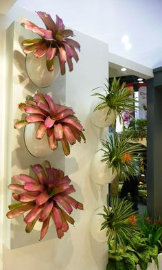 Bromeliad vertical garden for indoors