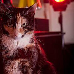 #pigalle #catislove  #queen #redlight #flash #studio #cats #cat #instacat #meow #catstagram #meow_beauties #catsofinstagram #parisian #montmartre #canon #beautiful  #angrycat
