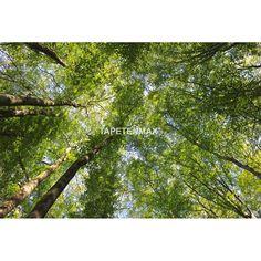 AP Digital – Architects-Paper Vliestapete – Tapeten Nr. 470105 in den Farben Grün jetzt bei TapetenMax® ✔ Schnelle Lieferung ✔ Kostenloser Versand ab 50€
