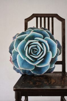 Succulent pillow!