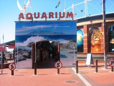 #Capetown Aquarium Local Attractions, Hidden Treasures, Cape Town, Cant Wait, Aquarium, City, Places, Lugares, Aquarium Fish Tank