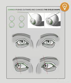 Anatomy Next - Anatomy of Head & neck: Secrets